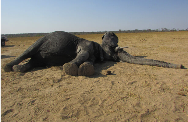 Hwange Elephant Movement Study 1