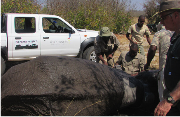 Hwange Elephant Movement Study 2